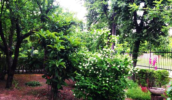 giardino dettaglio